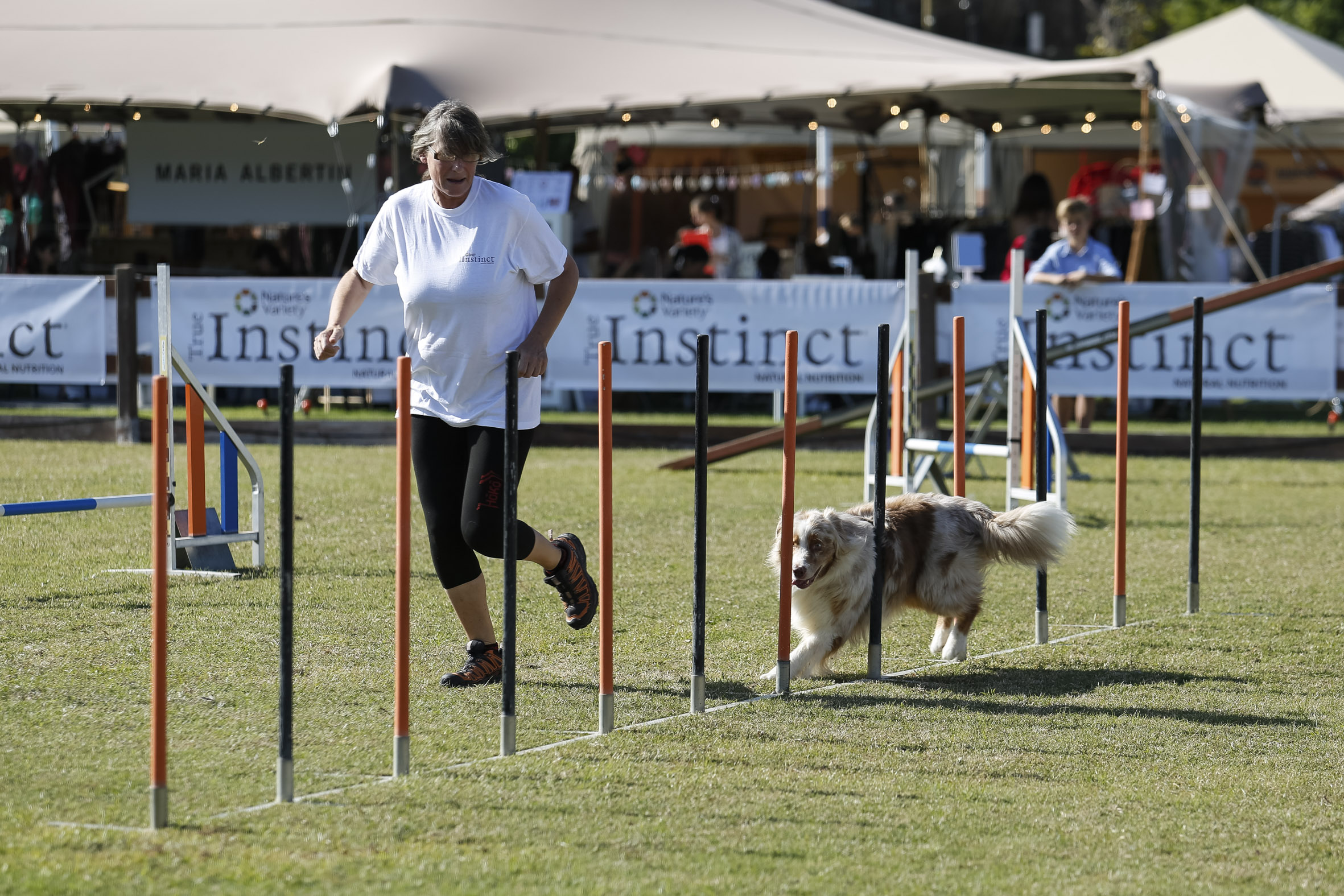 Agility show at poloPark